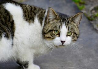 Adopción gatos callejeros