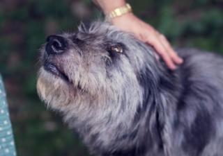 adopciones-de-mascotas