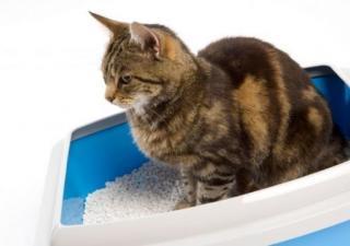 Arena de gatos