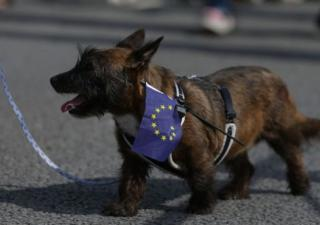 Brexit canino