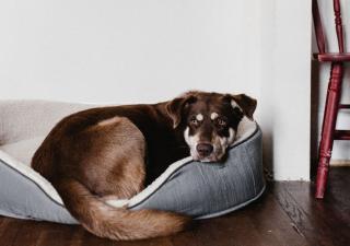 perro durmiendo en su cama