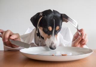 Dieta en perros