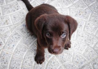 consejos para educar a un cachorro