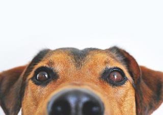 nariz perro