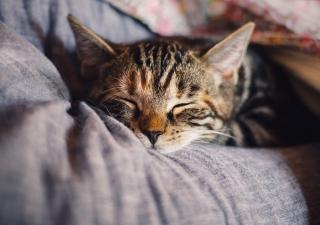Zonas de descanso para gatos