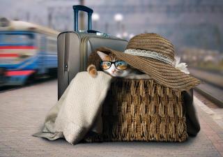 gato-viaje