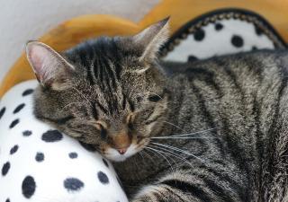 Cómo evitar el estrés en gatos
