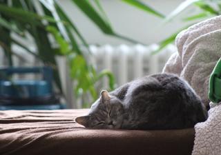 gato durmiendo tranquilo
