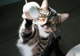Gato jugando con una bola