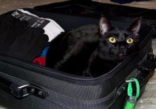¿Sabes con qué mascotas puedes viajar?
