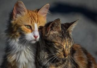 Período gatos