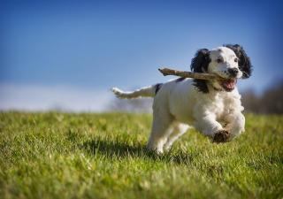 Ejercicio en perros