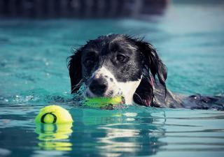 hidroterapia en perros
