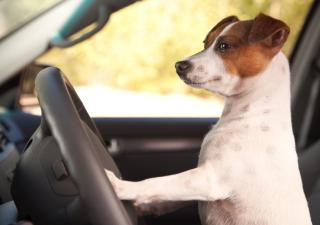 Je hond mee op vakantie? Tips voor een vlotte reis!