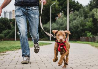 Pasear con perro cachorro