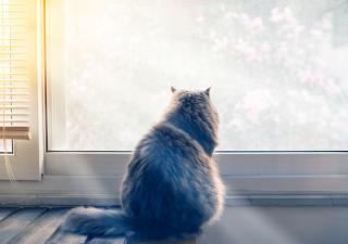 dejar el gato solo en vacaciones