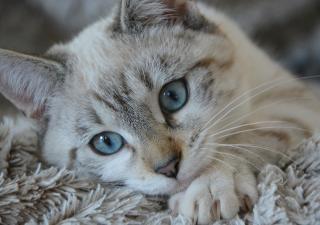 lenguaje-de-gatos