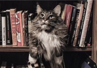 Libros de gatos