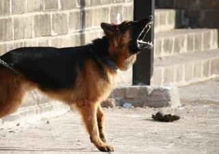 Mal humor en perros