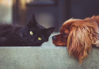 Elegir una mascota