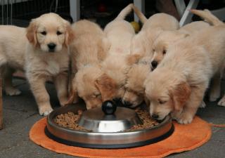 4 claves para mejorar la nutrición de tu mascota
