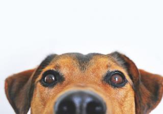 Perro alzheimer