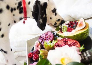 Perro fruta