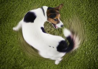 perro-nervioso