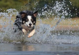 perro saltando