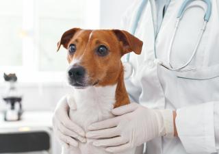 Perro asustado en el veterinario
