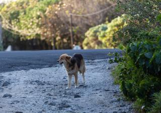 perro perdido en la calle