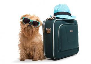 Viaje con perros
