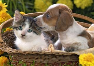 ¿Por qué perros y gatos se llevan mal?