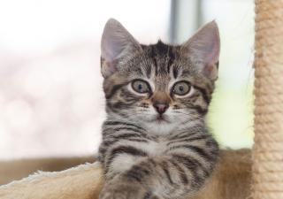rascador-de-gatos