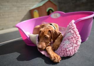 seguros-perros