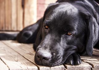 Cómo cuidar a tu perro anciano