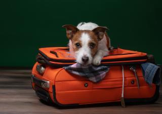 viajar con perros avión