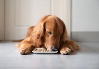 Cuántas veces debe comer un perro