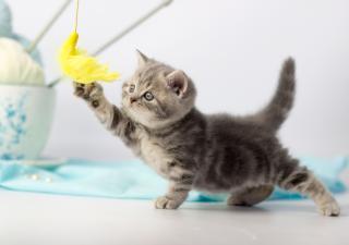 etapas de la vida del gato