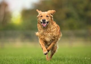 calentamiento perros ejercicio