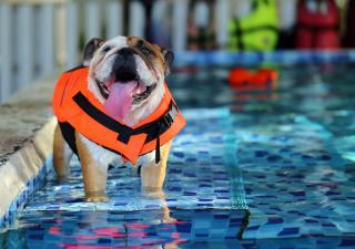 perro en una piscina haciendo hidroterapia