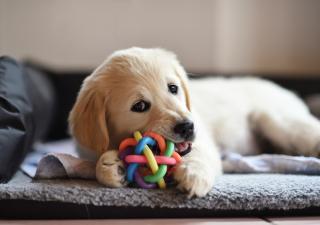 masticables perro