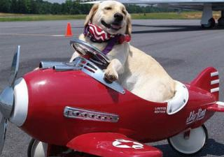 perro-avion