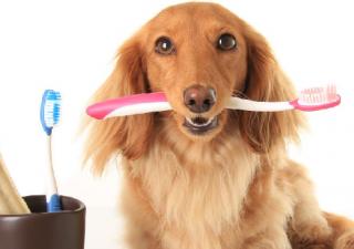 perro-dentadura
