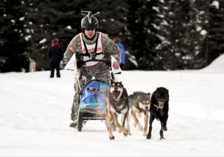 perros-deportes