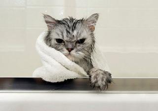 bañar-gato