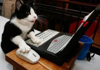 informacion-para-gato