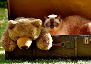 viajar-con-un-gato