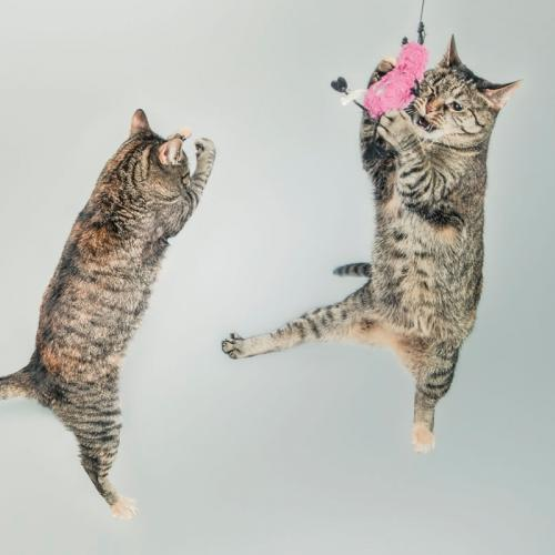 adiestramiento-gatos
