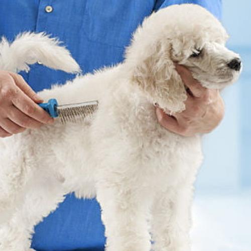 Caída de pelo en perros